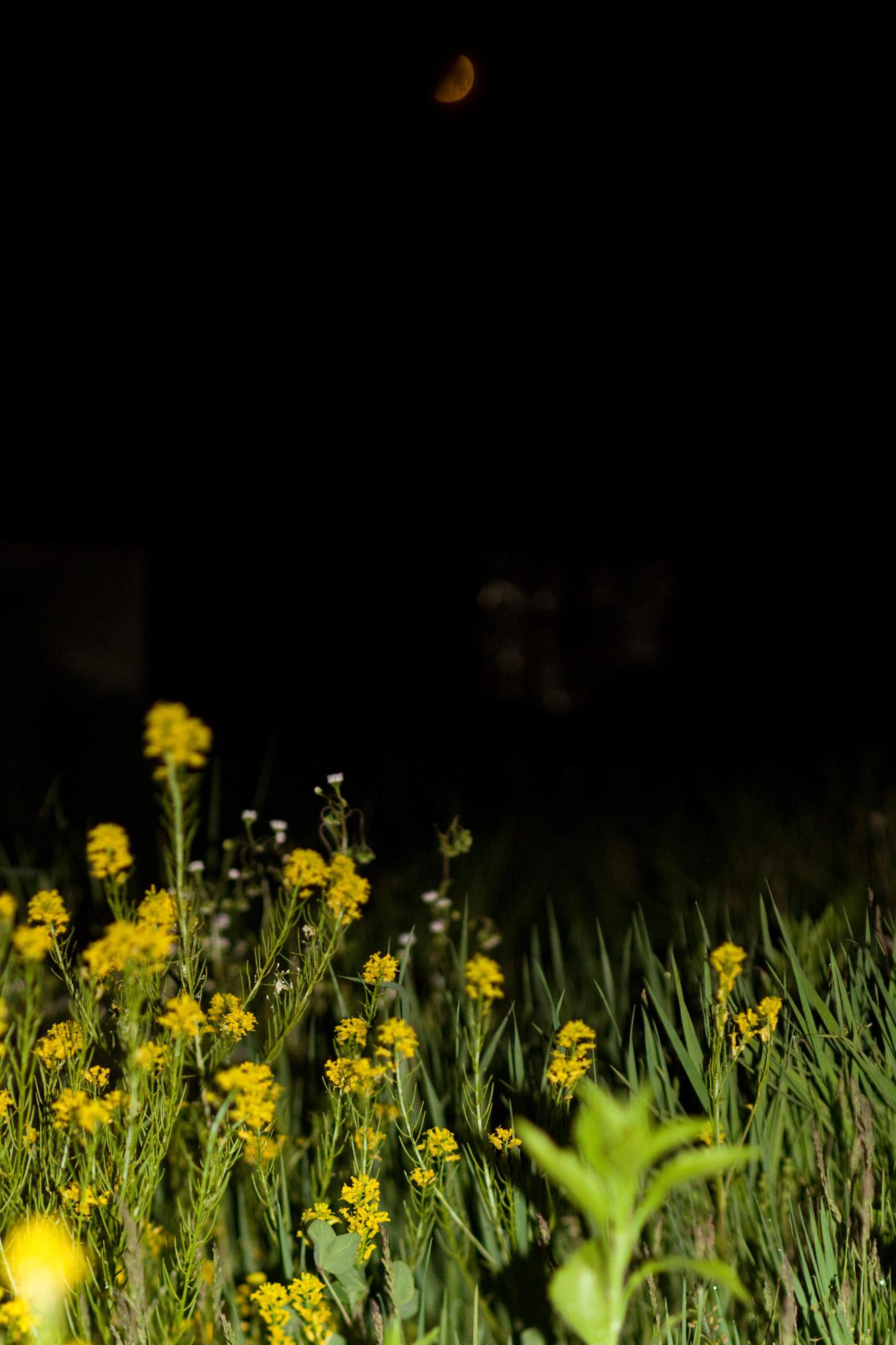 萤火虫飞舞的北斗七星等高清图片